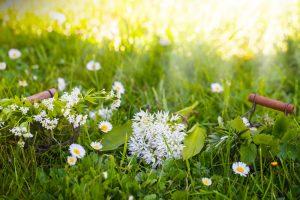 Jarné bylinky na lúke