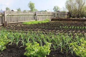 Apríl v znamení výsevov zeleniny: Všetko, čo by ste mali vedieť, aby ste sa tešili z krásnej úrody