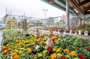 Sezóna vzáhradách je vplnom prúde. Záhradné centrá Hornbach sú otvorené