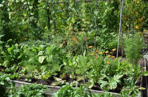 Prírodná úžitková záhrada