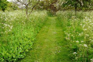 Prírodný trávnik