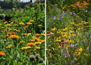 kvetinovy zahon