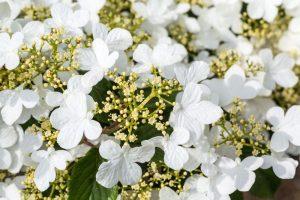 7 rastlín, ktoré zaujmú práve v máji