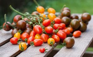 Úroda paradajok