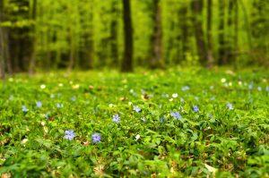 Pôdopokryvné rastliny pod stromami