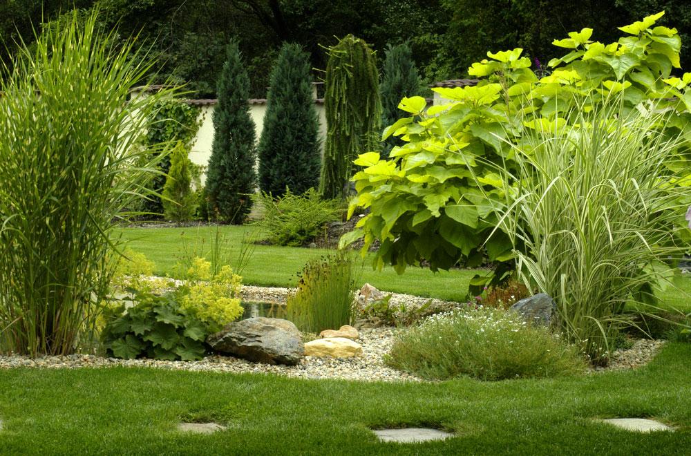 Veľký prehľad solitérnych rastlín, zktorého si určite vyberiete
