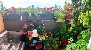 Na balkóne môžete pestovať kvety, bylinky i zeleninu.