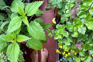 Balkónová záhradka