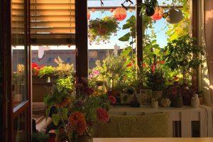 Balkónová záhrada, pohľad z kuchyne