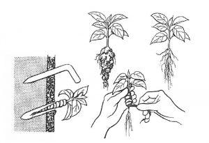 Postup výsadby rastlín do zelenej steny