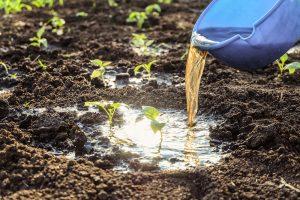 Polievanie záhrady domácim hnojivom