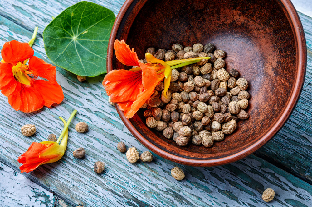 Kapucínka - kvety, listy a semienka