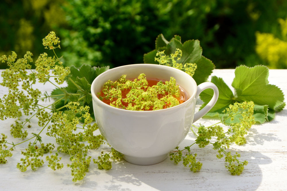 Čaj z alchemilky žltozelenej