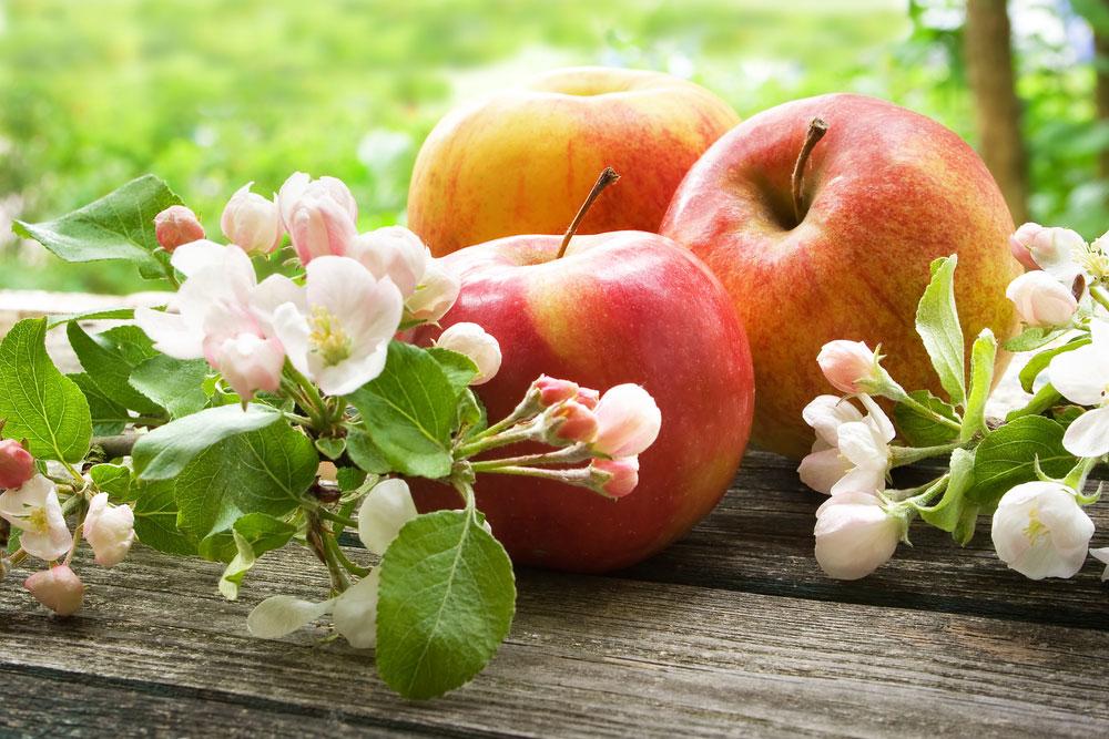Jablká a kvety jablone