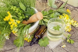 Alchemilka a ostatné bylinky na stole