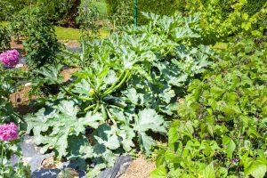 Úžitková záhrada počas júla