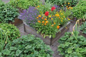 Zmiešaná výsadba - záhon s bylinkami