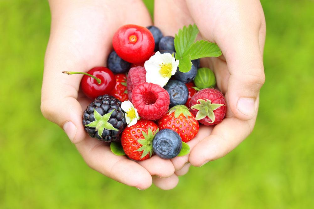 Drobné ovocie v dlaniach