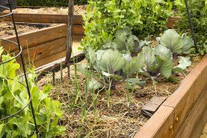 Vyvýšený záhon so zeleninou