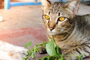 Mačka s kocúrnikom