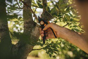 Záhradné nožnice Harmony