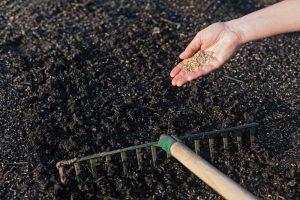 Zapracovanie trávneho osiva hrabľami