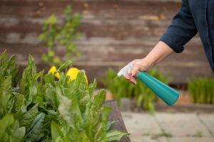 13 prírodných tipov, ako si poradiť s burinou a škodcami v záhrade