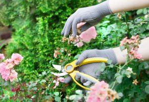 Rez kvitnúcich ruží