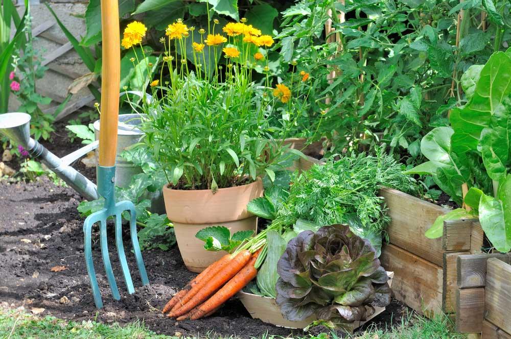 Zelenina v záhrade