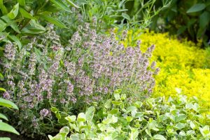 Záhon s bylinkami