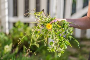 Burina v záhrade