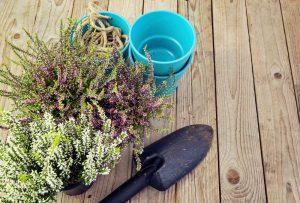 Vresy v kvetináči na stole, modré kvetináče a lopatka