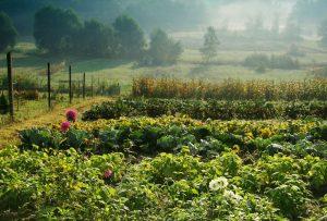 Záhrada koncom leta, ranný opar