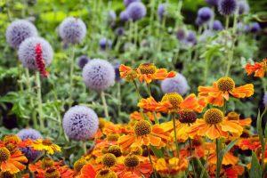Kvety neskorého leta v záhrade