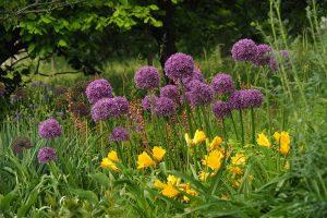 Všetko o výsadbe cibuľovín a hľuznatých rastlín: 8 najčastejších otázok a všetky dôležité rady