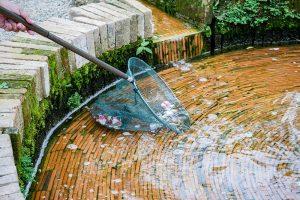 Odstraňovanie listov z jazierka