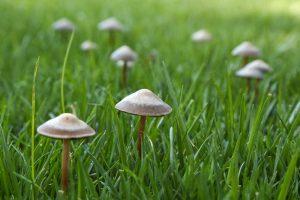 Huby v trávniku