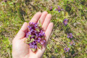 Čiernohlávok v dlani