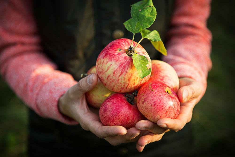 Jablká v dlaniach