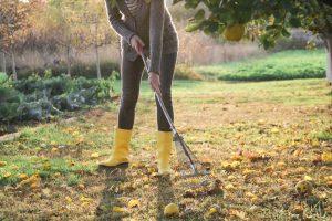 Starostlivosť o úžitkovú záhradu ide počas októbra do finále. Na čo nezabudnúť?