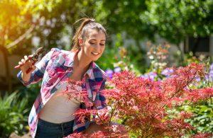Žena sa chystá na rez javora