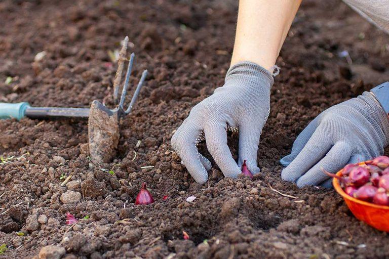 Októbrový sprievodca pestovaním: Toto vysievame a vysádzame práve teraz